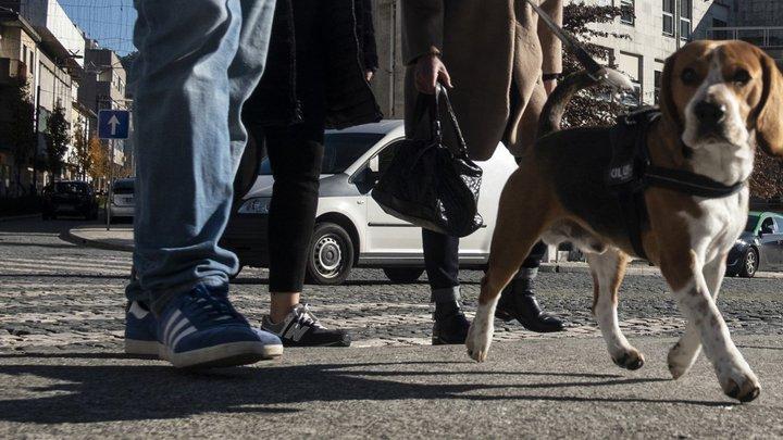"""Resultado de imagem para """"Duplicações"""" geraram problemas no registo de animais domésticos"""